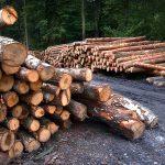 Védd a fákat – alternatív programajánló télire
