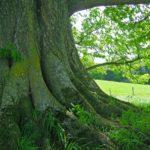 A Tóra fája, a Tanach fája