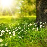 A rejtett fény – avagy a szép gondolatok élvezete